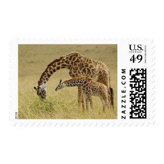 Mother and baby Masai Giraffe, Giraffa Postage