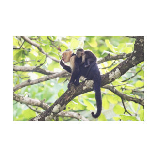 Mother and Baby Monkey Canvas Prints