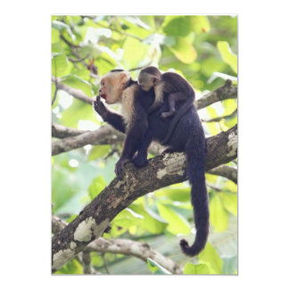 Mother and Baby Monkey Card