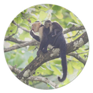 Mother and Baby Monkey Plate