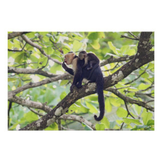 Mother and Baby Monkey Poster
