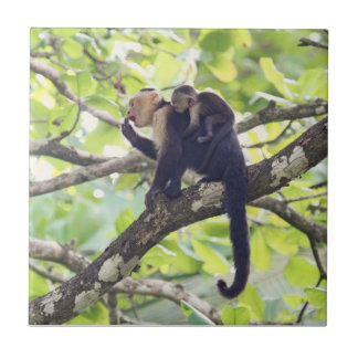 Mother and Baby Monkey Tile