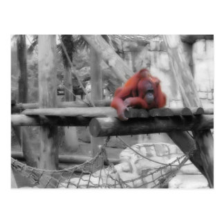 Mother and Baby Orangutan Postcard