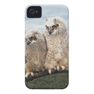 Mother and Baby Owl iPhone 4 Cover