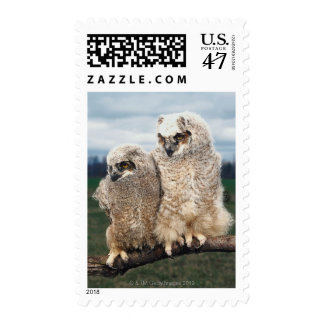 Mother and Baby Owl Postage