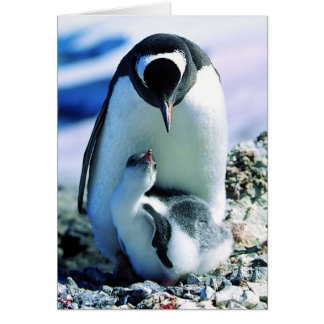 Mother And Baby Penguin Card