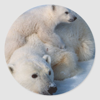 Mother and Baby Polar Bears Classic Round Sticker