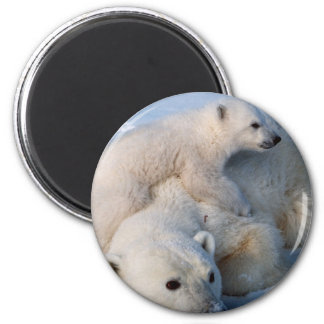 Mother and Baby Polar Bears 2 Inch Round Magnet