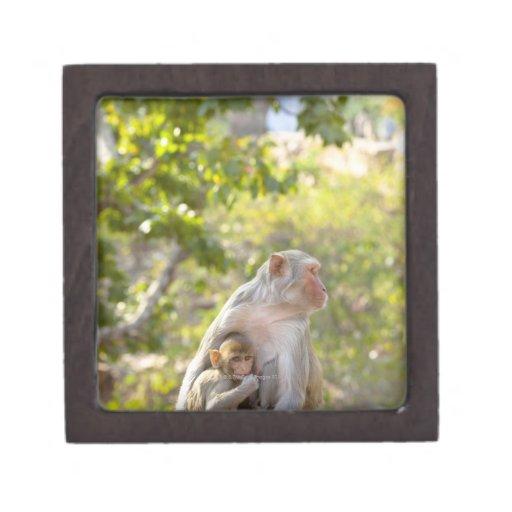 Mother and baby Rhesus Macaque monkeys on wall Keepsake Box
