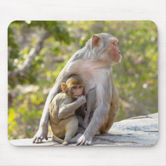 Mother and baby Rhesus Macaque monkeys on wall Mouse Pad