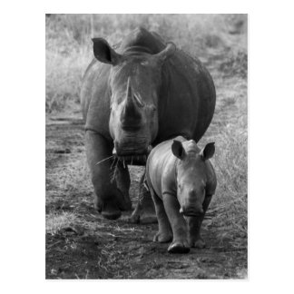 Mother and Baby Rhino Postcard