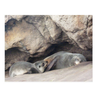 Mother and Baby Seal 1 Postcard