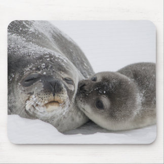 Mother And Baby Seal Love Mouse Pad