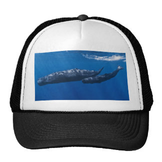 Mother and Baby Sperm Whale Physeter macrocephalus Trucker Hat