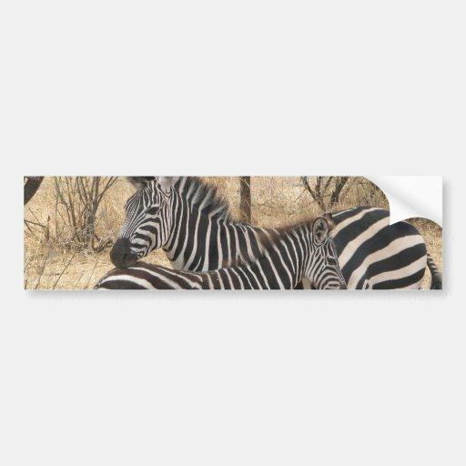 Mother and Baby Zebra  Bumper Sticker
