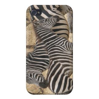 Mother and Baby Zebra iPhone 4 Case