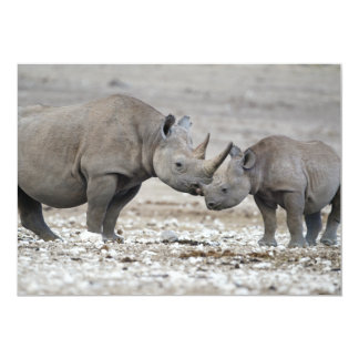 Mother and Calf Black Rhinoceros Diceros Bicornis Card