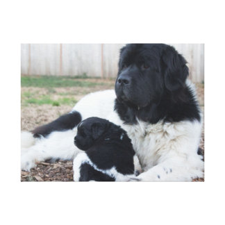 Mother and child Newfoundland dog (v. 2) Canvas Print