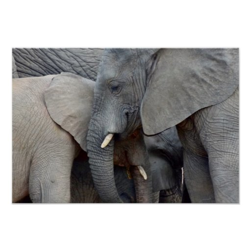 Mother and Daughter Elephants Poster