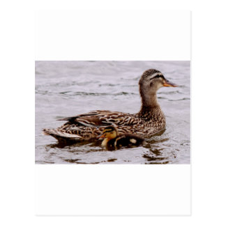 mother and duckling postcard
