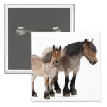 Mother and foal smiling, Belgian horse, Belgian Button