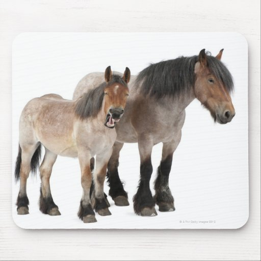 Mother and foal smiling, Belgian horse, Belgian Mouse Pad