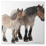 Mother and foal smiling, Belgian horse, Belgian Tile