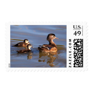 Mother and Wood Ducklings Postage Stamp