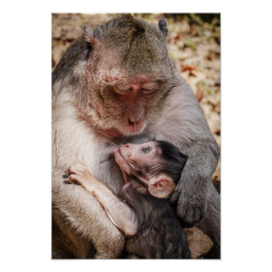 mother baby monkey poster