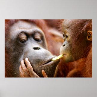 Mother & Baby Orangutan Poster