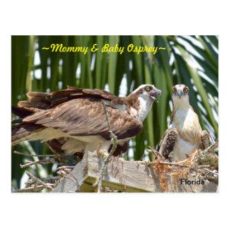 Mother & baby Osprey in nest Postcard