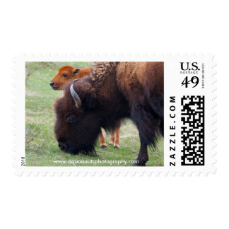Mother & Baby Yellowstone Buffalo Postage Stamps