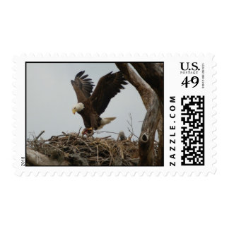 Mother Bald Eagle Stamps