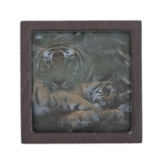 Mother Bengal Tiger with Cub Jewelry Box
