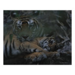 Mother Bengal Tiger with Cub Poster