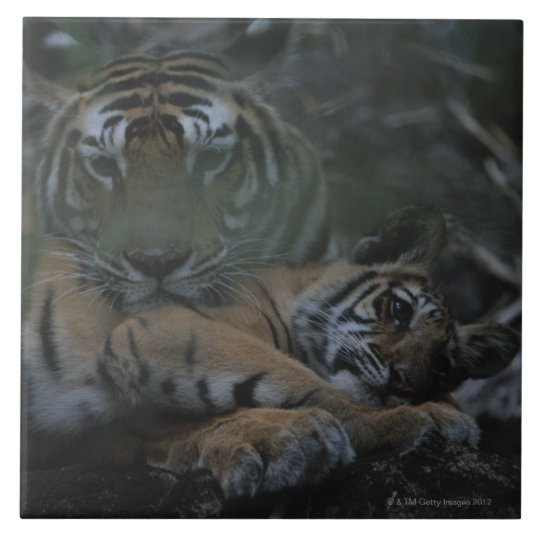 Mother Bengal Tiger with Cub Tile
