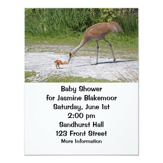 Mother Bird and Baby Bird Sandhill Cranes Card