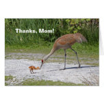 Mother Bird and Baby Bird Sandhill Cranes Greeting Card