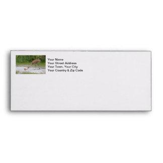 Mother Bird and Baby Bird Sandhill Cranes Envelopes