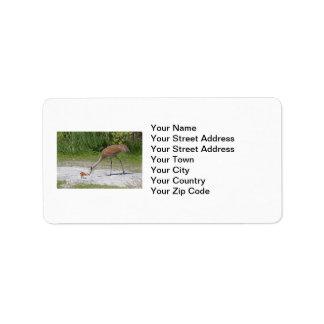 Mother Bird and Baby Bird Sandhill Cranes Custom Address Labels