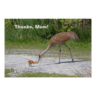 Mother Bird and Baby Bird Sandhill Cranes Poster