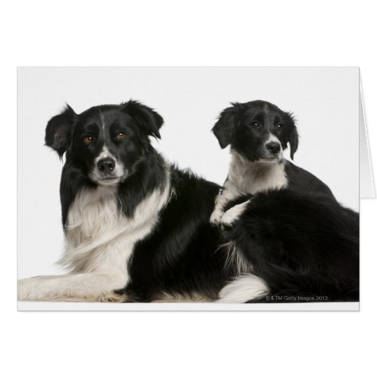 Mother border collie and puppy card