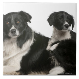 Mother border collie and puppy ceramic tile