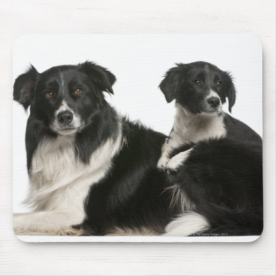 Mother border collie and puppy mouse pad