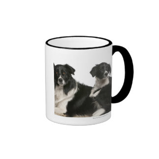 Mother border collie and puppy mugs
