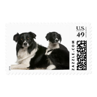 Mother border collie and puppy postage