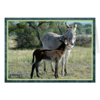 Mother burro and baby greeting card