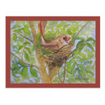 Mother Cardinal on Nest Postcard