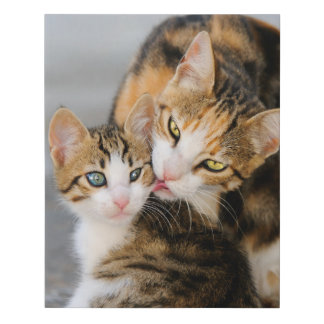 Mother Cat Loves Cute Baby Kitten Animal Pet Photo Faux Canvas Print