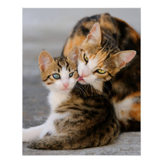 Mother Cat Loves Cute Kitten, Photo Poster
